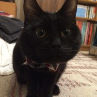 名前はグッスリです。猫はいません。